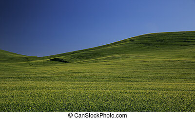 Rolling Green Wheat Fields of the Palouse Country With Blue...
