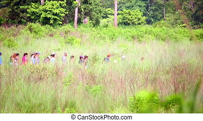 Group of tourist walking along lush meadow at Chitwan...