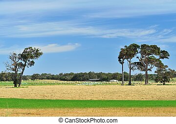 the sun once shone - australian farmland with mown and baled...