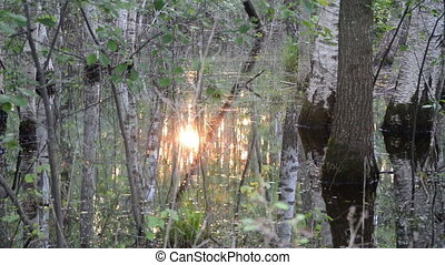 sun reflect water forest - Closeup of forest trees in flood...