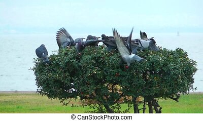 Pigeons on the Tree