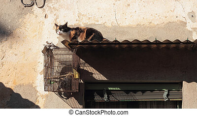 cat and bird cage - cat and pigeon in a bird gage
