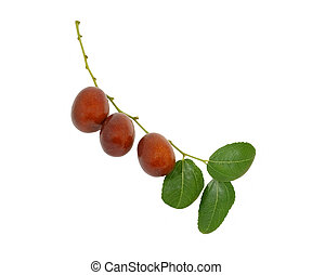 jujube fruit on branch with leaves - jujube fruit (Ziziphus...