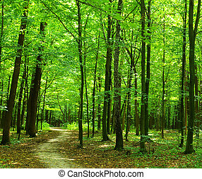 Path in forest - Path in summer green forest