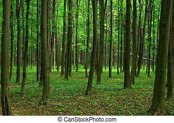green forest  - Trees in a  green forest