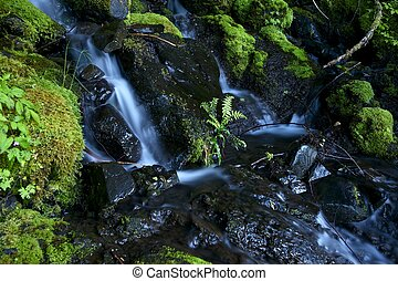 Mossy Creek in the Olympic National Park, Washington, USA....