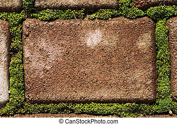 Cobblestone andmoss  - Cobblestone pavement with moss