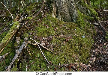Mossy Nature - Moss in a Forest. Montana, USA. Nature Photo...