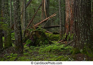 Deep Mossy Forest