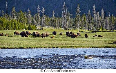 Yellowstone, Paisagens