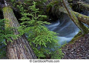 Glacier Creek