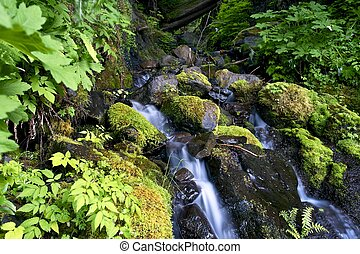 Olympic National Park - Small Creek Closeup. Mossy Olympic...