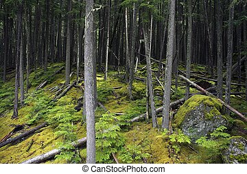 Mossy Deep Forest