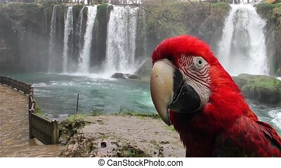 Parrot and the waterfall