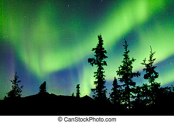 Yukon taiga spruce Northern Lights Aurora borealis - Intense...