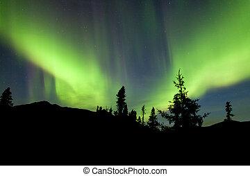 Yukon, Taiga, picea, norteño, luces, aurora, borealis