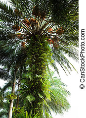 bird nest fern  - bird nest fern