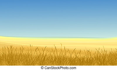 Field of yellow grass and blue sky. - Vector horizontal...