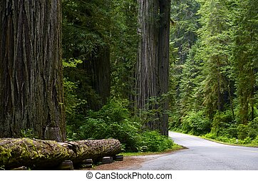 國家, 紅杉, 森林