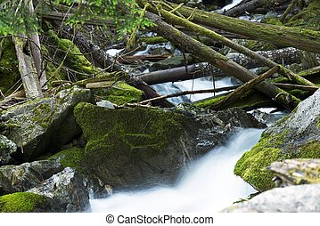 North Cascades Mountains Creek Closeup. Mossy and Rocky...
