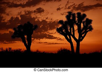 Mojave Desert Sunset - Mojave California, USA Sunsets Photo...