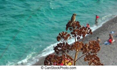 Bird and the Beach