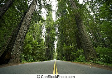 Redwood State Park. Redwood Forest, California USA. Nature...