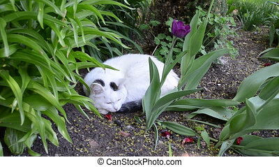 cat garden flower bed - Cute white cat pet with dark spots...