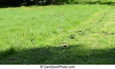 person grass lawn mower - Person walk along lawn mower on...