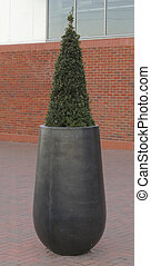 Ornamental plant in pot - Large ornamental plant in pot on...
