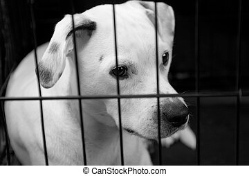 Lonely Dog In A Cage - A white dog looking out of a cage
