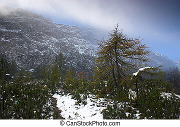 Austrian Alps - Snowy mountain and trees in Alp region of...