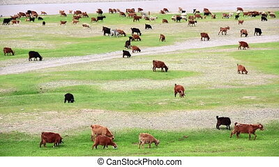 Animals grazing on river bank