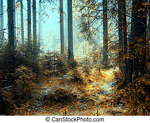 forest - a breathtaking view as the sun shines through the...