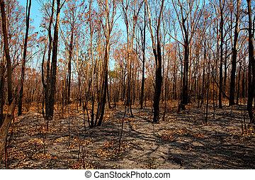 Blackened trees and bushland after bushfire - Blackened...