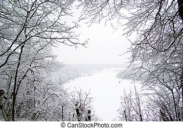 snowy trees - Winter landscape with snowy trees