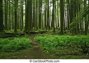 Mossy Forest Scenery