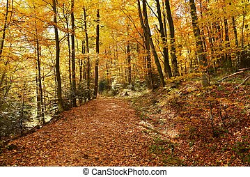 Autumn forest - Beautiful autumn forest in Poland -...