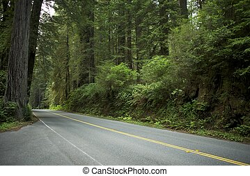 Road in Redwood Forest in Northern California, U.S.A....