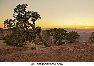 Canyonlands Flora - Raw Canyonlands Flora - Utah's...