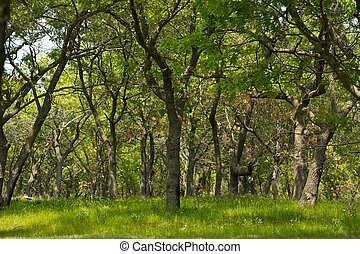 Short Trees Forest