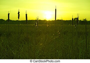 Green Meadows Nature Background. Green Meadows Sunset -...