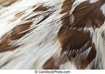 Eagle Feathers Closeup. White Feathers with Brown Spots....