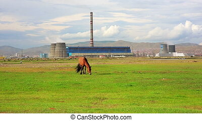Horse grazing next to power plant