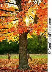 Autumn Park. Golden Leaves on the Tree. Wildlife in the...