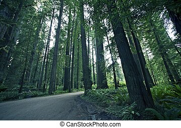Redwood Forestry. Northern California State Redwood State...