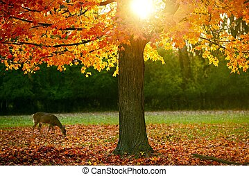 Fall Season in the Park. Orange-Reddish Leaves on Tree and...