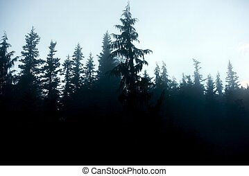 Dark Forest Background - Dark Foggy Forest Background - Fog...