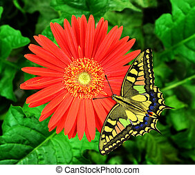 Flower - A beautiful butterfly on a beautiful flower