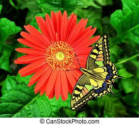Flower - A beautiful butterfly on a beautiful flower.